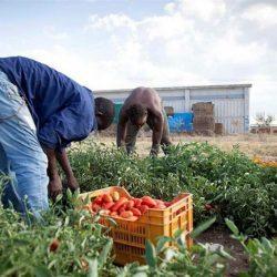 La mezza vittoria della regolarizzazione dei lavoratori immigrati