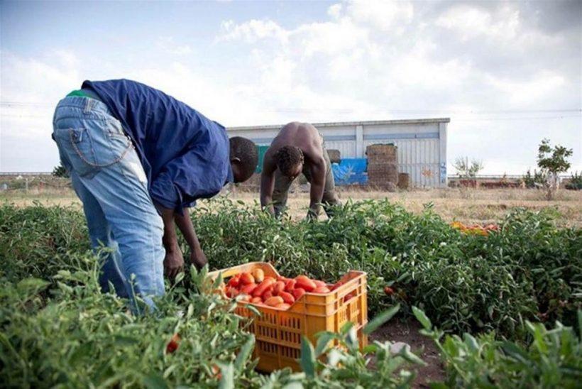 migranti in agricoltura